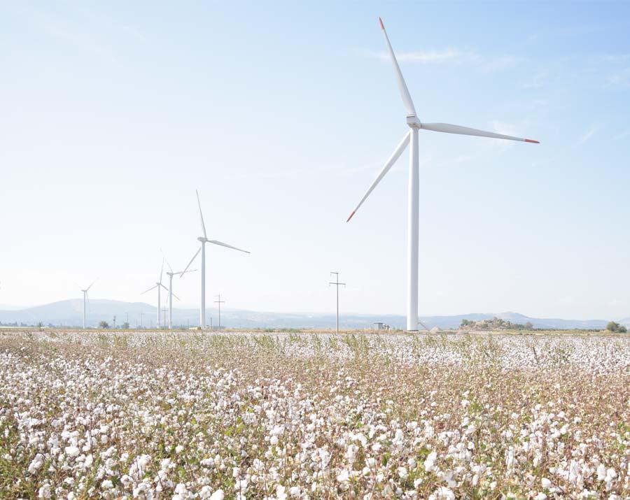coton bio et éoliennes