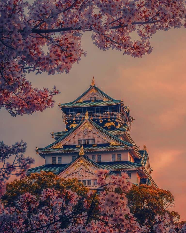 Temple japonais à la floraison des cerisiers